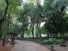 Parque México 11