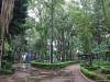 Parque México 20