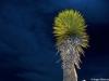 199__480x359_planta-tipica-de-desierto