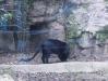 zoo24