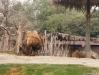 zoo36